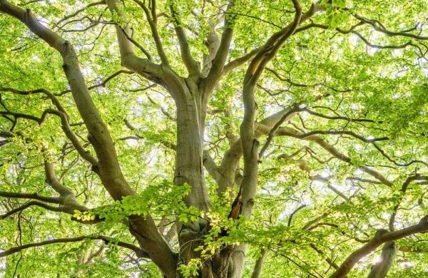 """Aunque parece que hay una sola forma de actuar porque """"soy así"""", si miramos bien el árbol podemos ver la cantidad de opciones que podemos tener. Puedo elegir."""